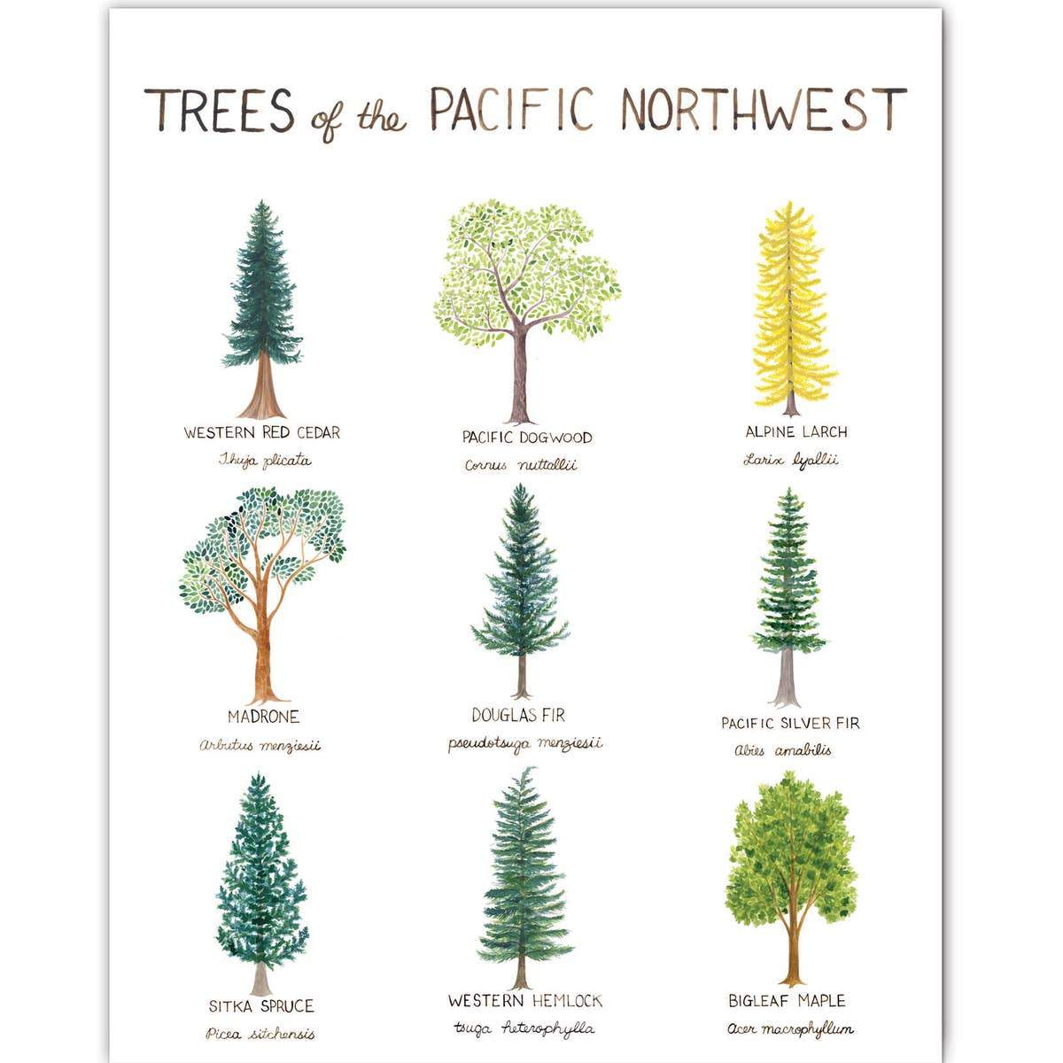 "Pacific Northwest Trees Art Print - 11"" x 14"""