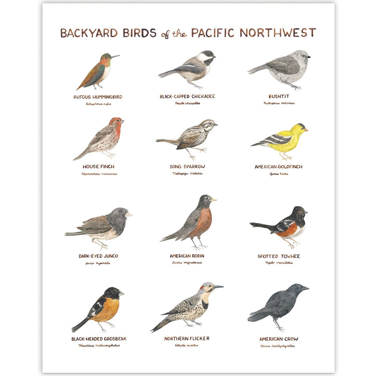 "Backyard Birds of the PNW Art Print - 11"" x 14"""