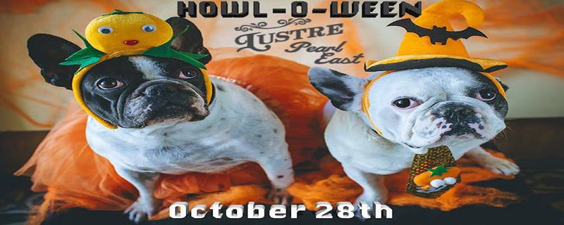 Lustre Pearl's Howl-O-Ween x Dog on Fleek