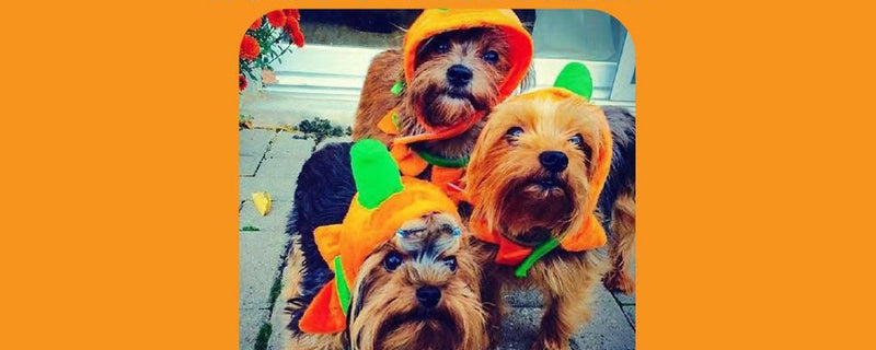 BarkHappy Houston x Dog On Fleek Halloween Dog Costume Party