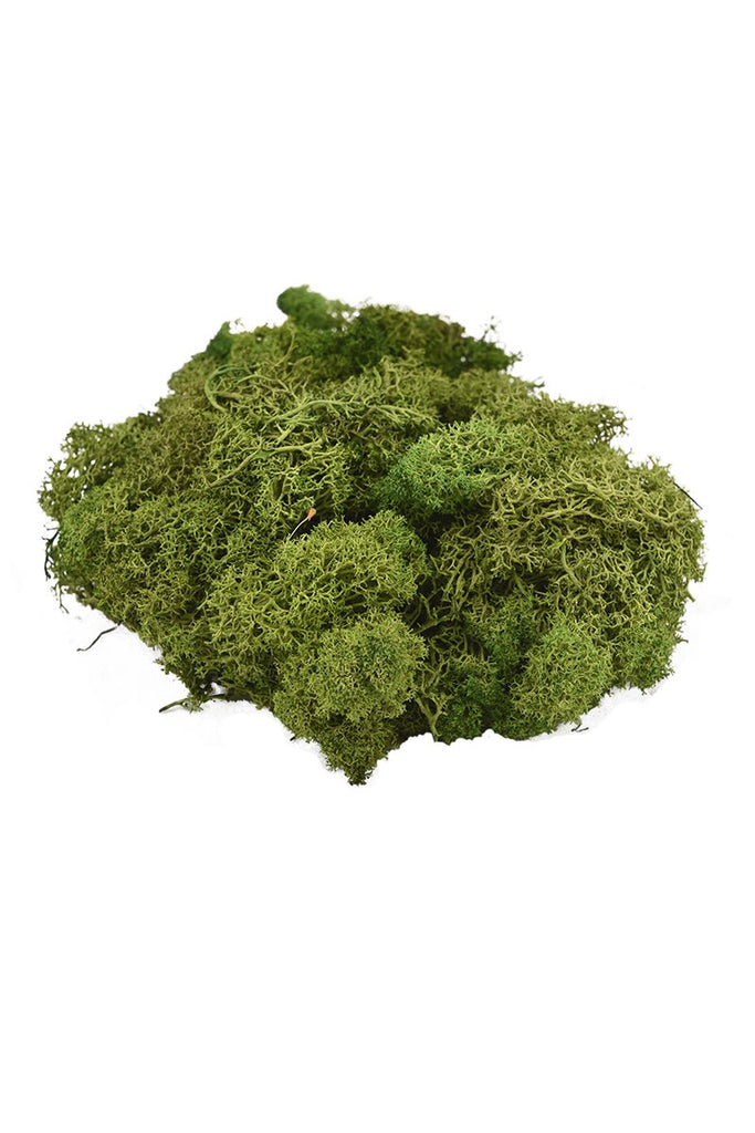 real moss