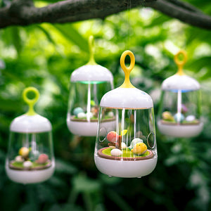 Little Bird Musical Box Night Lamp