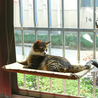 Cat Window Hammock Cat Bed Kitty Sunny - Buy1More
