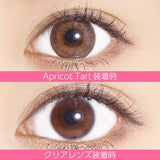 Marble By Luxury 1 Day ApricotTart - 小さい兎USAGICONTACTカラコン通販 | 日本美瞳 | Japanese Color Contact Lenses Shop