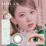 MOLAK 1 Day DazzleGray - 小さい兎USAGICONTACTカラコン通販 | 日本美瞳 | Japanese Color Contact Lenses Shop