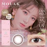 MOLAK 1 Day SakuraPetal - 小さい兎USAGICONTACTカラコン通販 | 日本美瞳 | Japanese Color Contact Lenses Shop