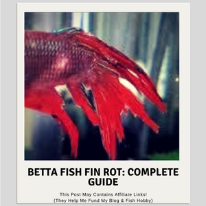 Betta Fish Fin Rot: Complete Guide