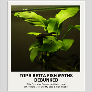 Top 5 Betta Fish Myths Debunked