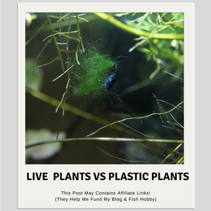 Live Aquarium Plants Vs Plastic Aquarium Plants