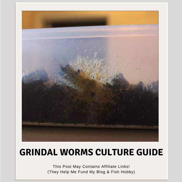 Grindal Worms Culture Guide