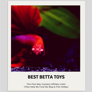 5 Best Betta Toys & Decorations