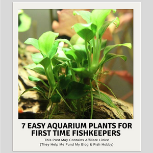 Seven Easy Aquarium Plants For First Time FishKeepers