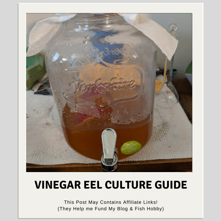 Vinegar Eels Culture Guide