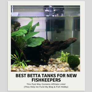 Best Betta Tanks For New Fish Keepers Plus Bonus DIY Option
