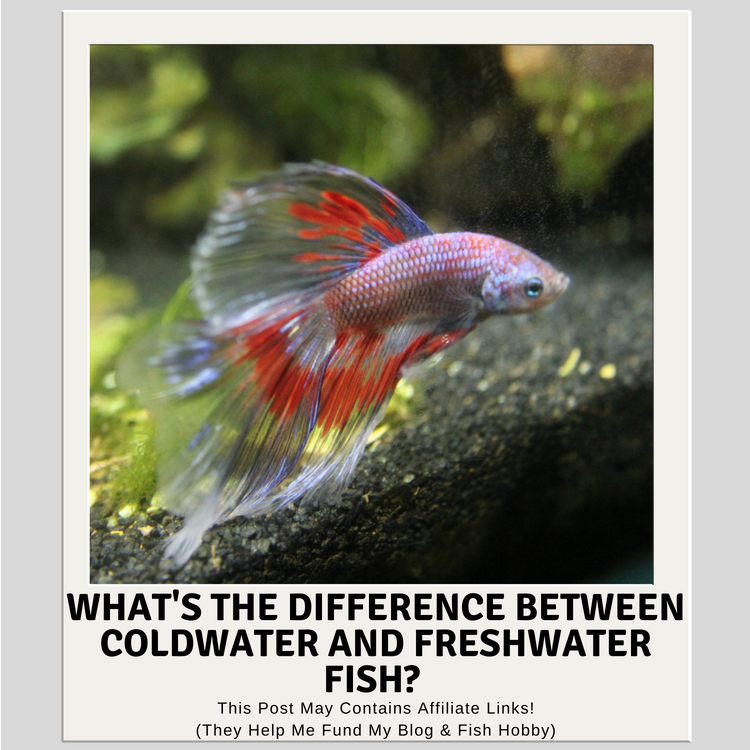 What's The Difference Between Coldwater Fish and Tropical Fish?