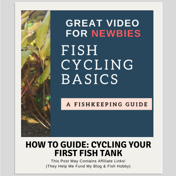 How To Guide: Cycling Your First Fish Tank