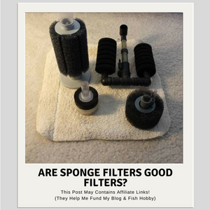 Are Sponge Filters Good Filters?