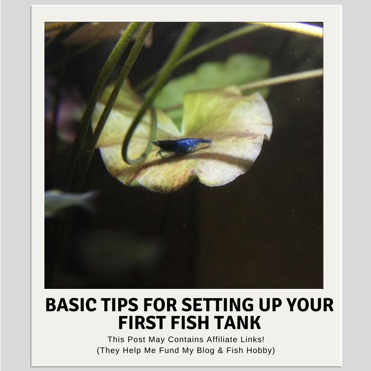 Basic Tips For Setting Up Your First Fish Tank