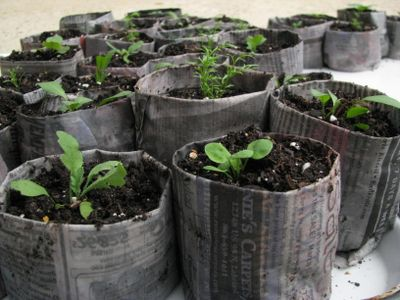 How to Make Newspaper Pots for Seed Starting/Cuttings