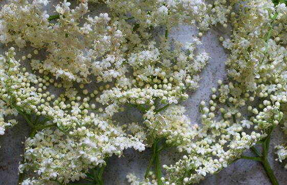 Preserving Elderflowers
