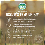 Oxbow Animal Health Orchard Grass Hay All Natural Grass Hay for Chinchillas Rabbits Guinea Pigs Hamsters & Gerbils