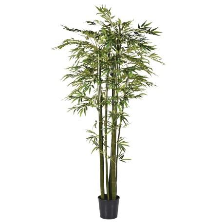 Green Bamboo Tree In Black Plastic Pot