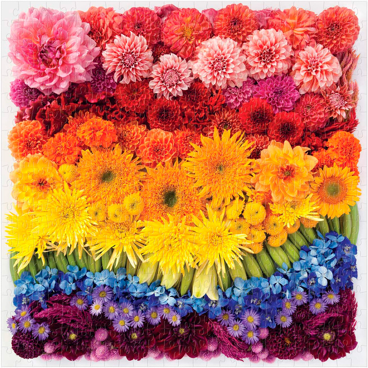 Rainbow Flowers puzzle 500 piece galison