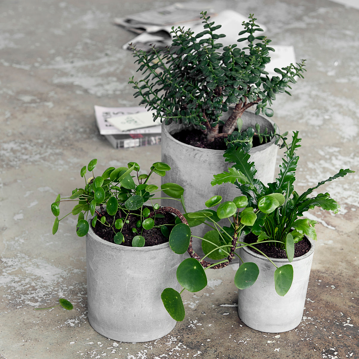 Concrete Planter, Ave, Light grey society of lifestyle