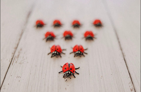 Little Ladybugs (10)