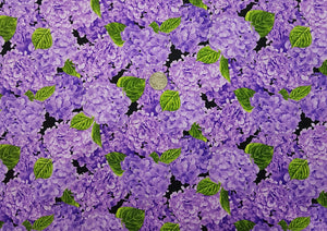 Purple hydrangea, all over, on black