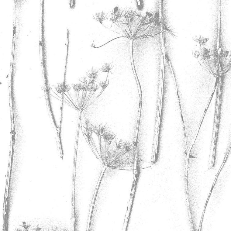 Queens Anne's Lace Botanical Wallpaper By Woodchip & Magnolia