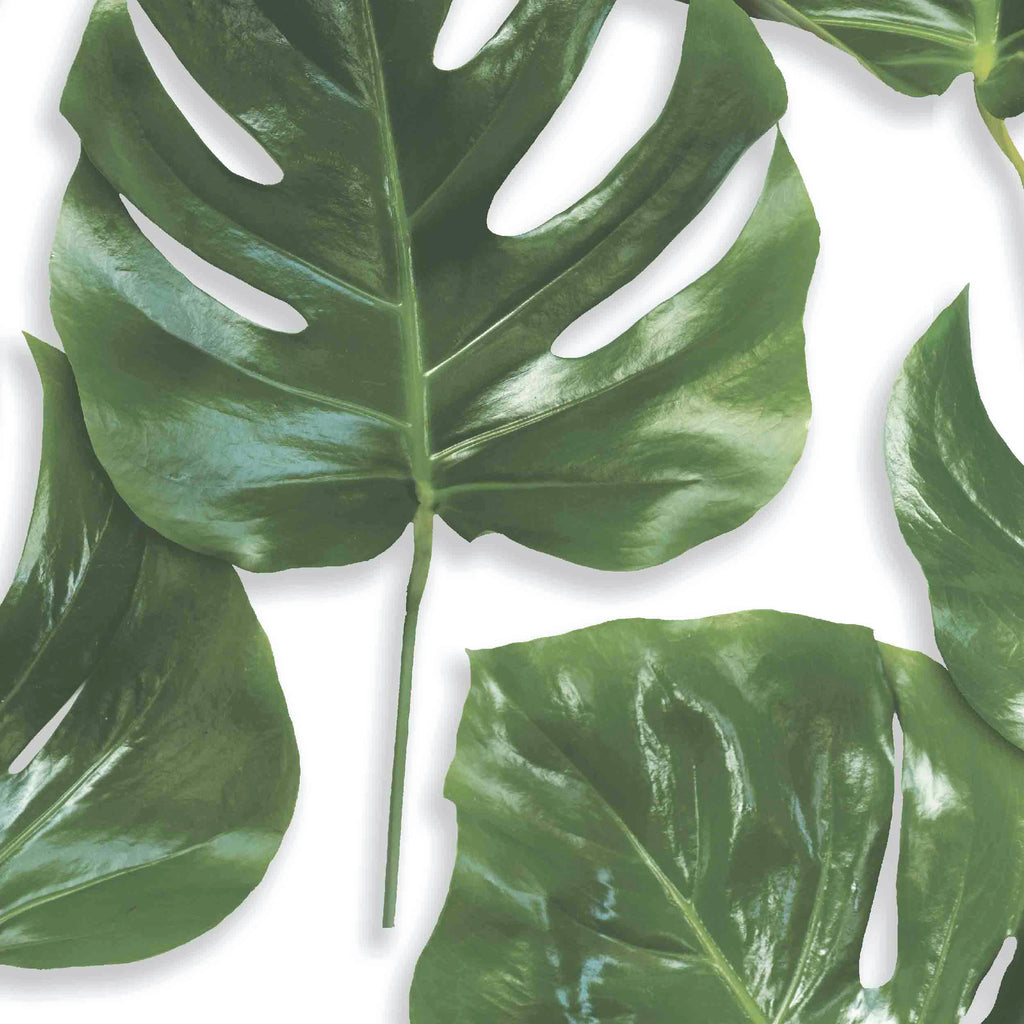 Monstera Leaf Print Wallpaper Green On White