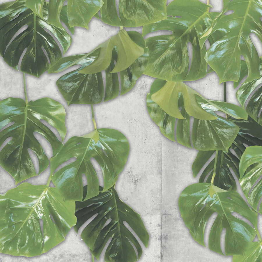 Real Monstera Wall Mural