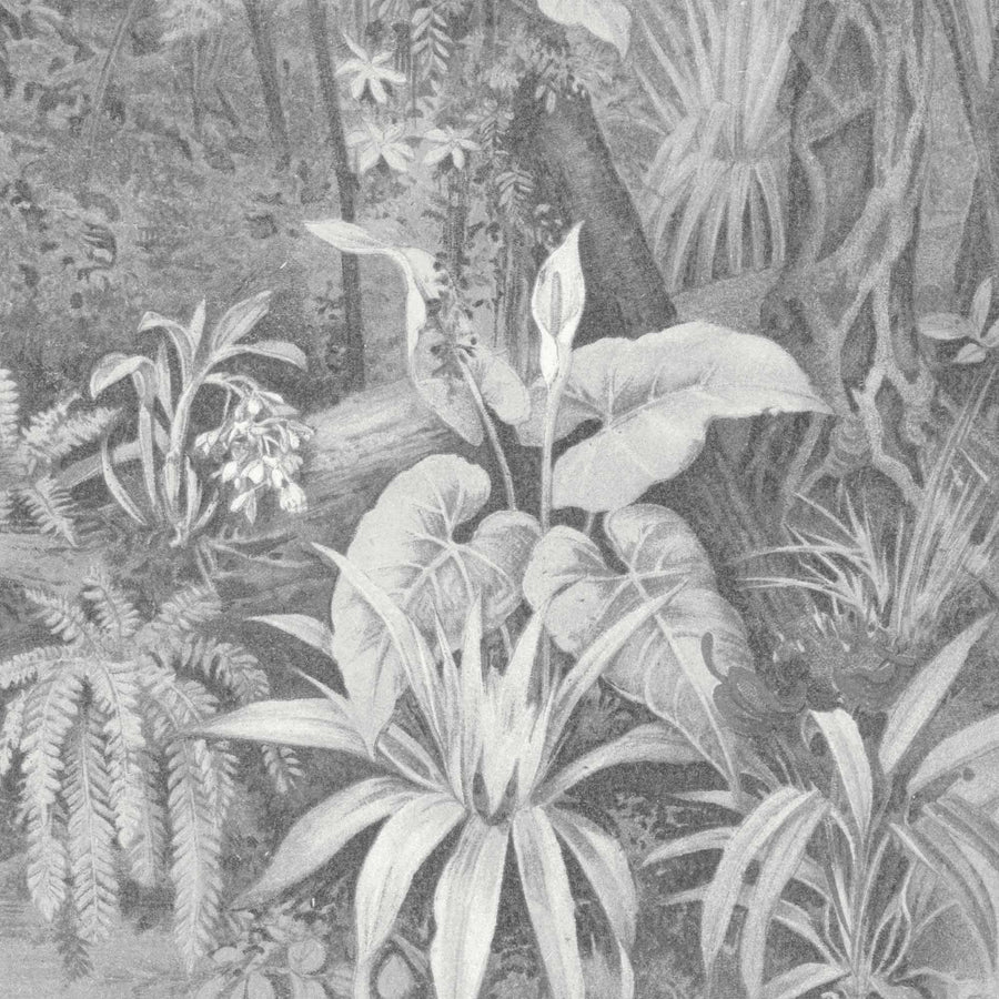 Tropical Paradise Jungle Mono Grey Wall Mural