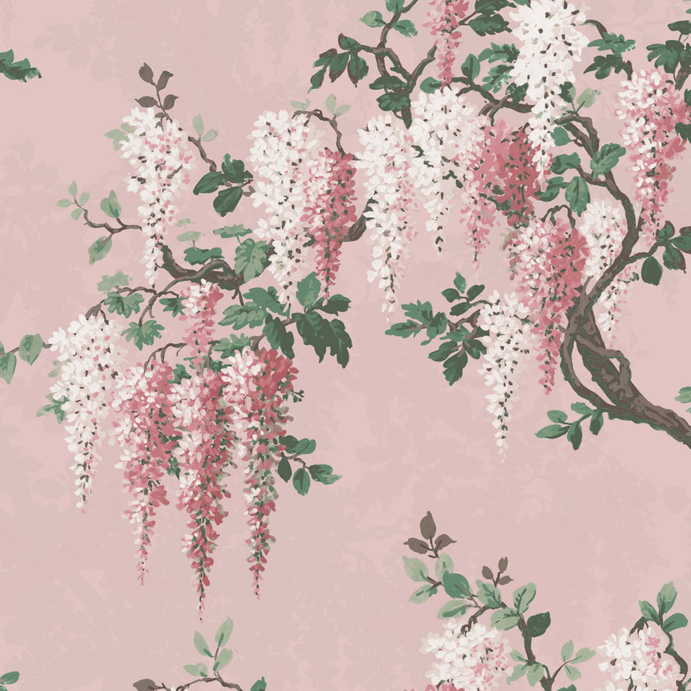 Wisteria in Pink Bloom Floral Wallpaper