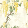 Wisteria in Lemon Yellow Wallpaper By Pearl Lowe