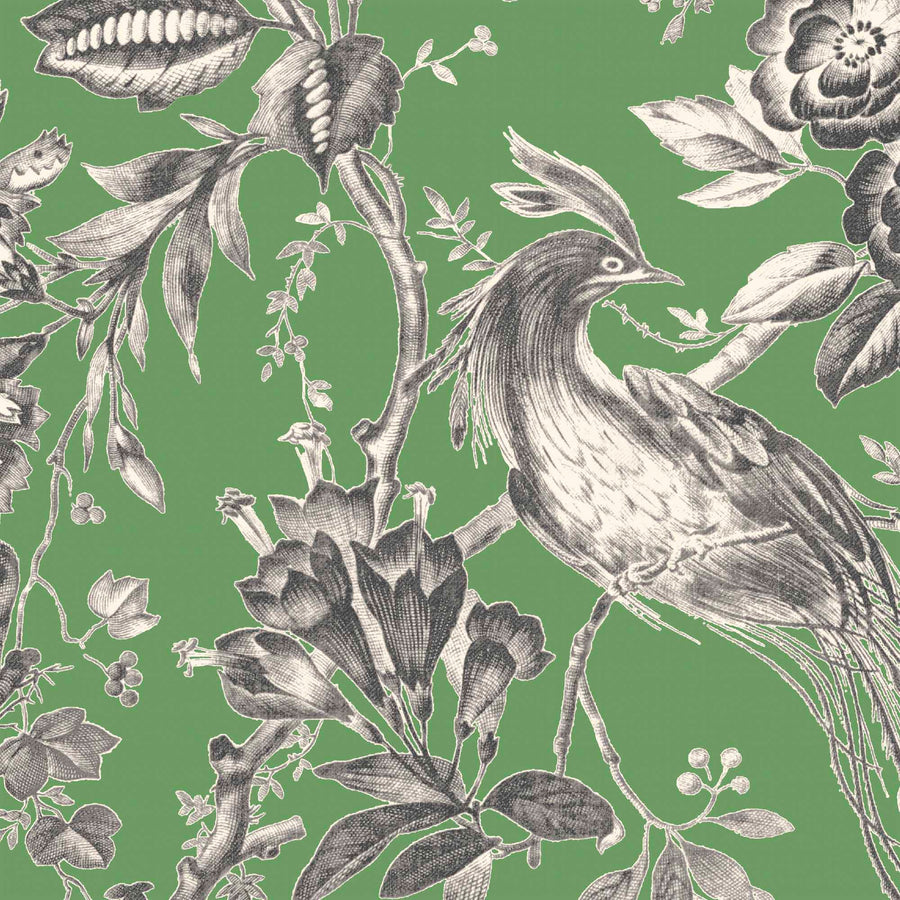Plumage Jade Botanical Bird Wallpaper By Woodchip & Magnolia