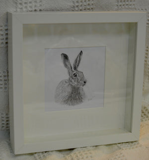 Print. Framed print of pencil drawing of Hare by Between the woods & sea. (91FHPDP1)