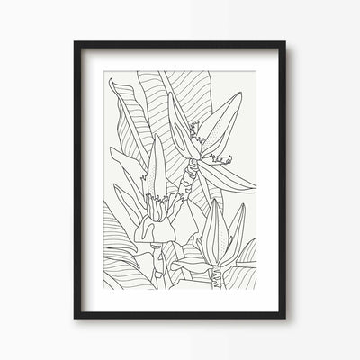Banana Flower Line Art - Green Lili