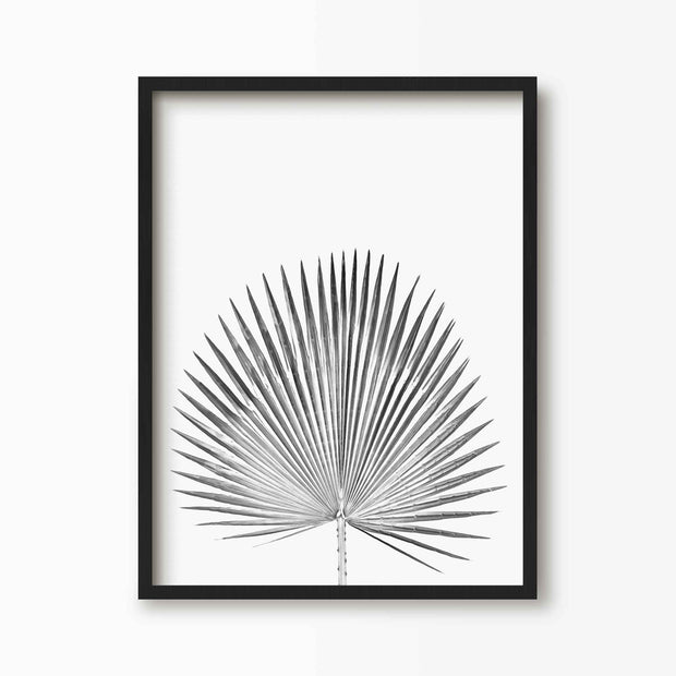Black and White Palm Leaf Fan Print