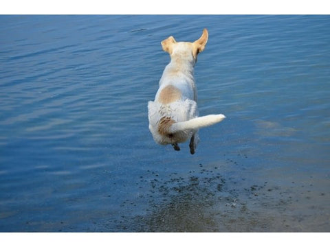 Summer Safety Tips for Dogs Dog jumping