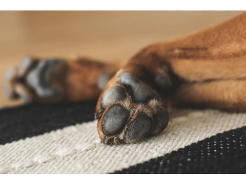 Summer Safety Tips - Dog paws