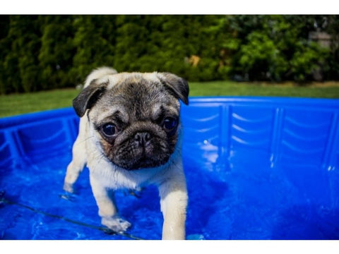 Summer Safety Tips for Dogs bathtub