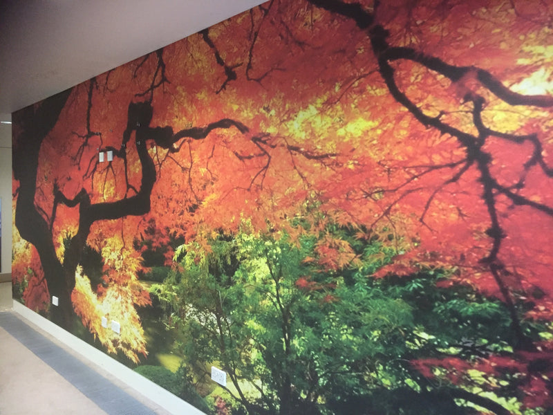 8m Wide Maple Tree Wall - Install at Woodland Grange - Stunning