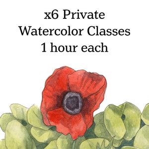 Class-6 Private Watercolor lessons