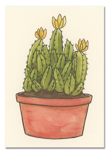 Fairy Castle Cactus Postcard