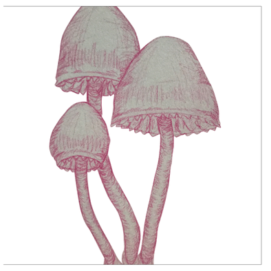 Just Mushrooms Greeting Cards