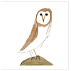 Barn Owl Greeting Cards