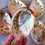 Mini Abalone Shell // Sustainably Farmed