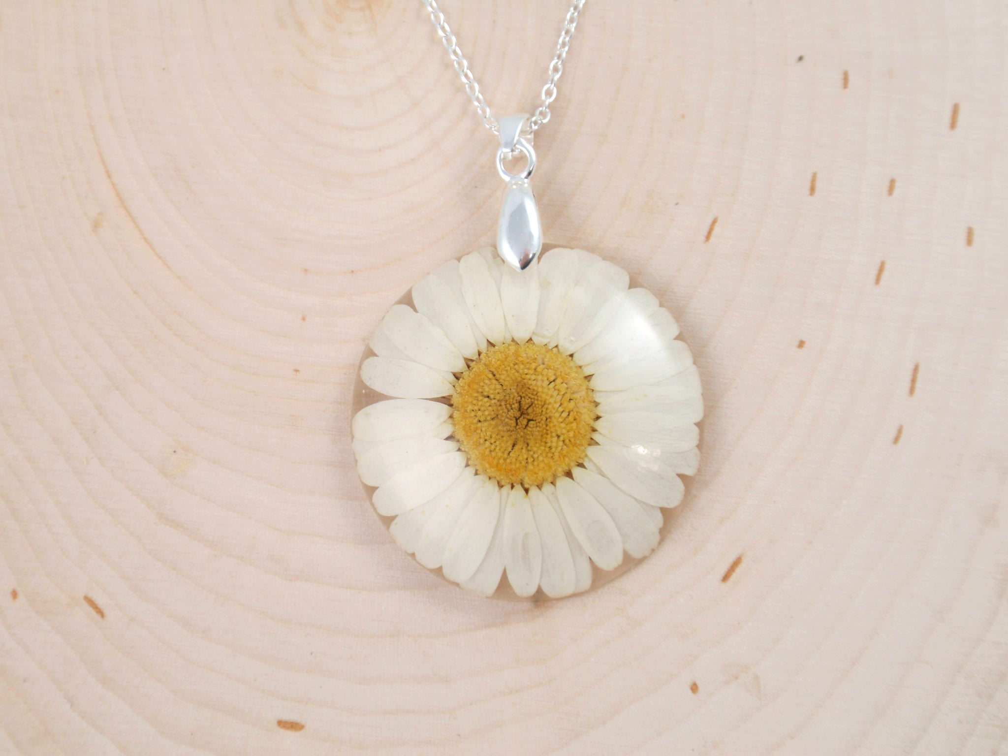 Daisy Birth Month flower April